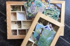 Boites à semences et images des legumes correspondants